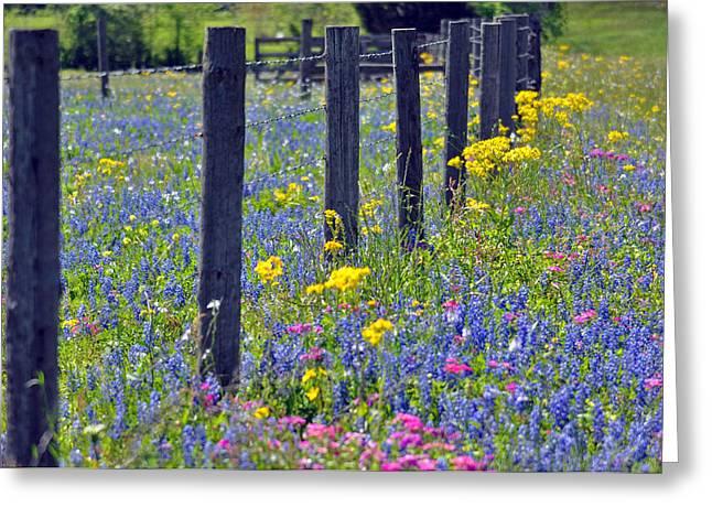 Wildflower Fenceline Greeting Card by Teresa Blanton
