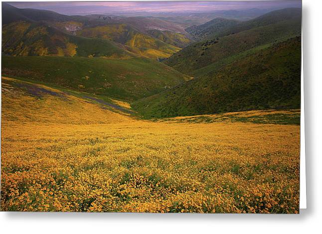Greeting Card featuring the photograph Wildflower Field Up In The Temblor Range At Carrizo Plain National Monument by Jetson Nguyen