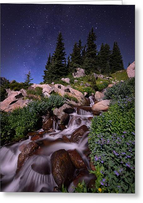 Wildflower Finale In The Indian Peaks Greeting Card by Mike Berenson