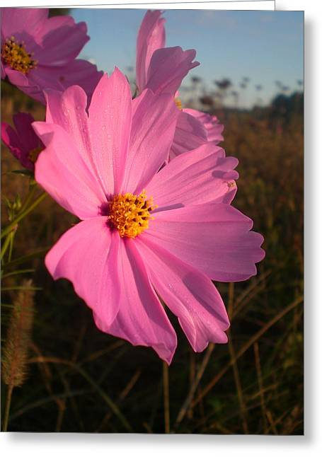 Wildflower Greeting The Day II Greeting Card by Wendy Robertson