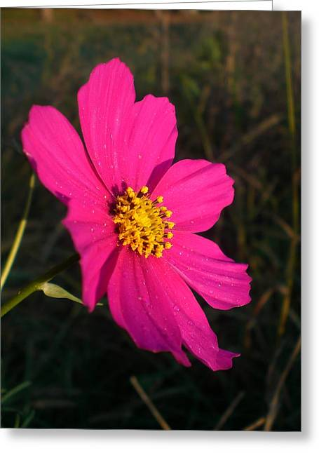 Wildflower Greeting The Day Greeting Card by Wendy Robertson