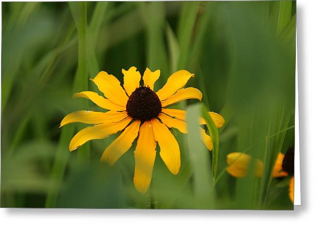 Wildflower Greeting Card by Gregory Jeffries