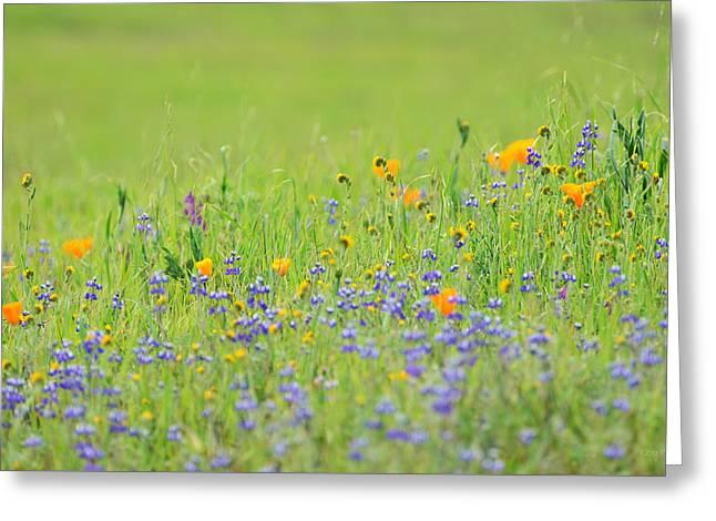 Wildflower Impressions Greeting Card by Kathy Yates
