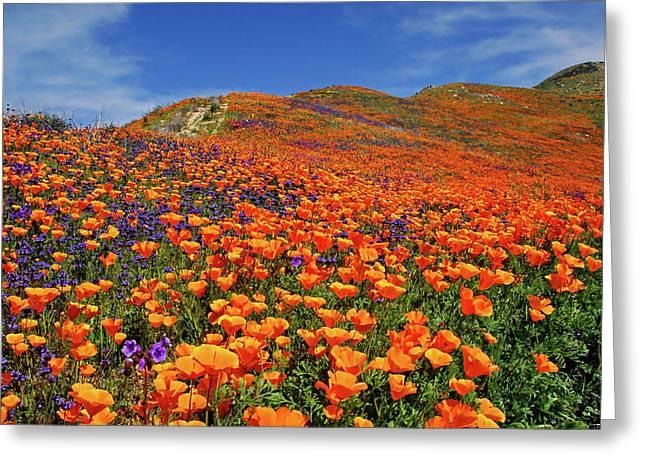 Wildflower Jackpot Greeting Card