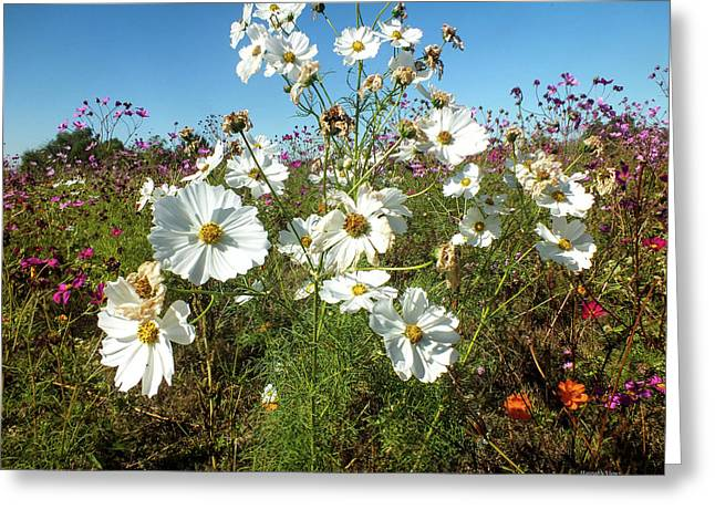 Wildflower Mania Greeting Card