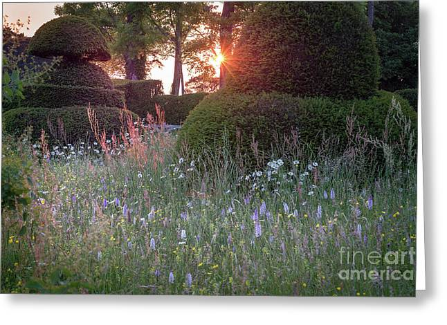 Wildflower Meadow At Sunset, Great Dixter Greeting Card