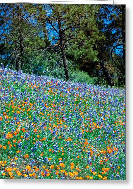 Greeting Card featuring the photograph Wildflower Meadow - Figueroa Mountains California by Ram Vasudev