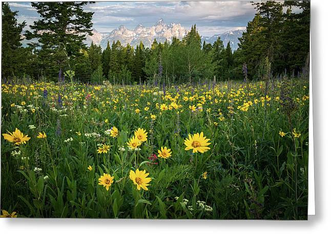 Wildflower Meadow In The Tetons Greeting Card