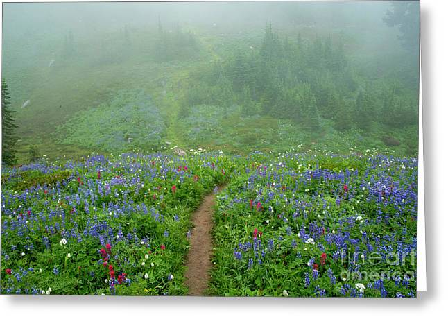 Wildflower Meadow Trail Greeting Card