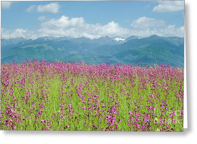 Wildflower Meadows And The Carpathian Mountains, Romania Greeting Card