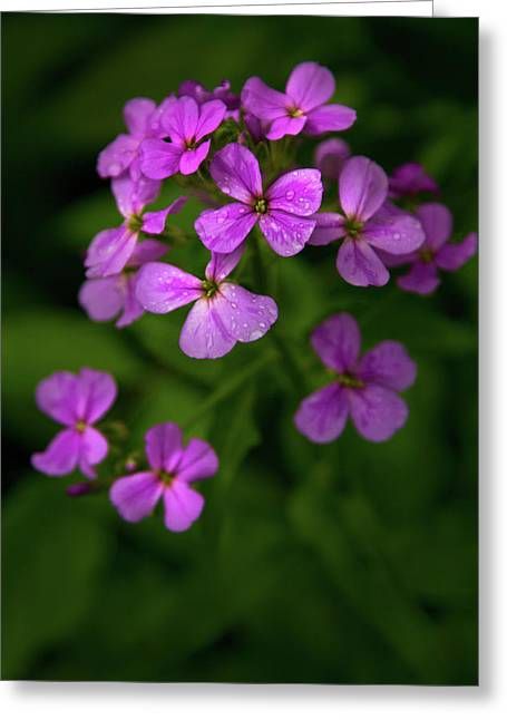 Wildflower Pallette Greeting Card by Timothy McIntyre