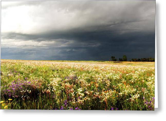 Wildflower Panorama 2008 Greeting Card