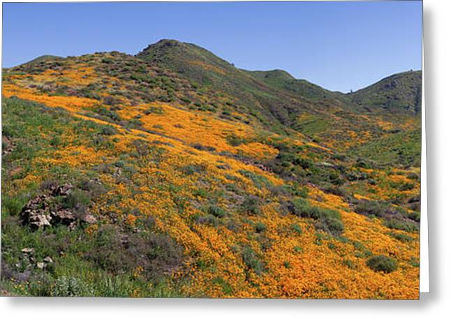Greeting Card featuring the photograph Wildflower Panoramic by Cliff Wassmann