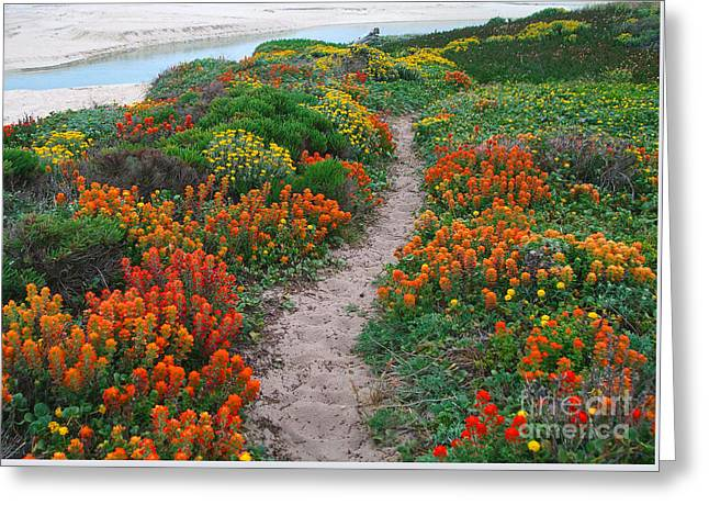 Wildflower Path At Ribera Beach Greeting Card