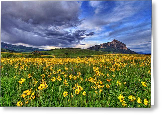 Wildflower Storm Greeting Card