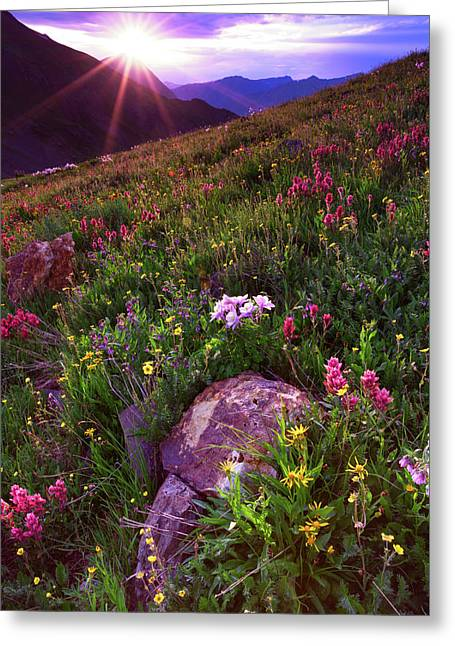 Wildflower Sunburst On Stony Pass Greeting Card by Mike Berenson