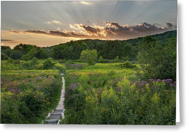 Wildflower Sunset 2016 Square Greeting Card by Bill Wakeley