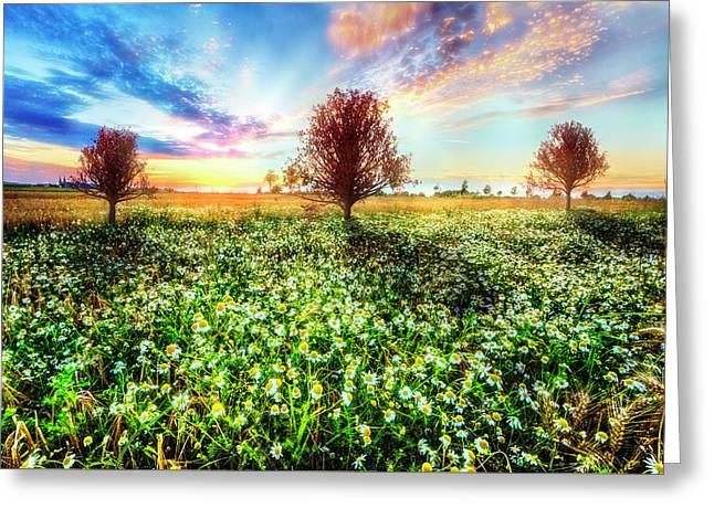 Wildflower Sunset Greeting Card by Debra and Dave Vanderlaan
