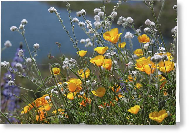 Greeting Card featuring the photograph Wildflower Super Bloom At Diamond Valley Lake by Cliff Wassmann