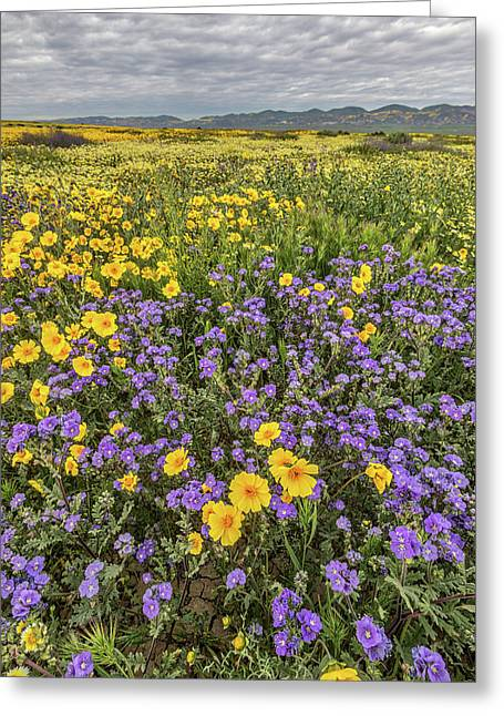 Greeting Card featuring the photograph Wildflower Super Bloom by Peter Tellone