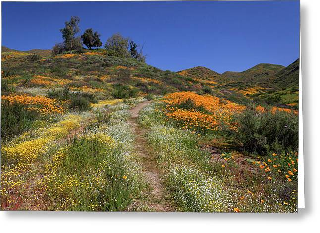 Greeting Card featuring the photograph Wildflower Superbloom by Cliff Wassmann