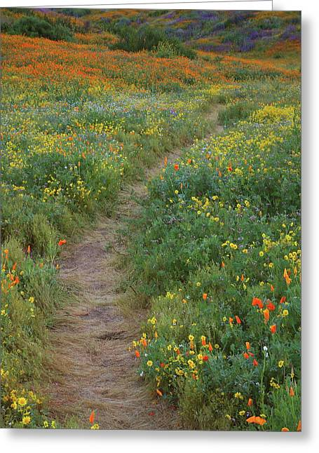 Greeting Card featuring the photograph Wildflower Trail At Diamond Lake In California by Jetson Nguyen
