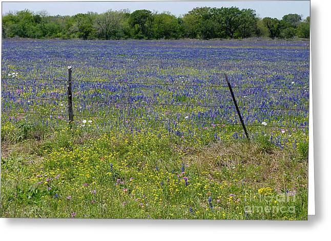 Wildflowers - Blue Horizon Greeting Card by Lucyna A M Green