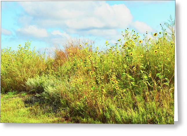Wildflowers Along A Country Road  Photography  Greeting Card by Ann Powell