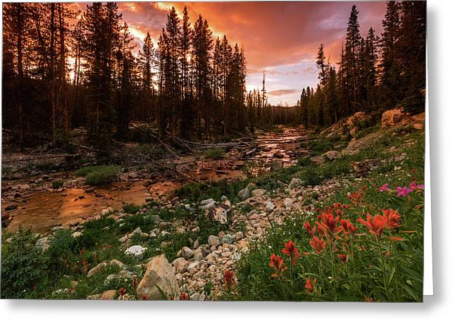 Wildflowers Along The Provo River. Greeting Card by Johnny Adolphson