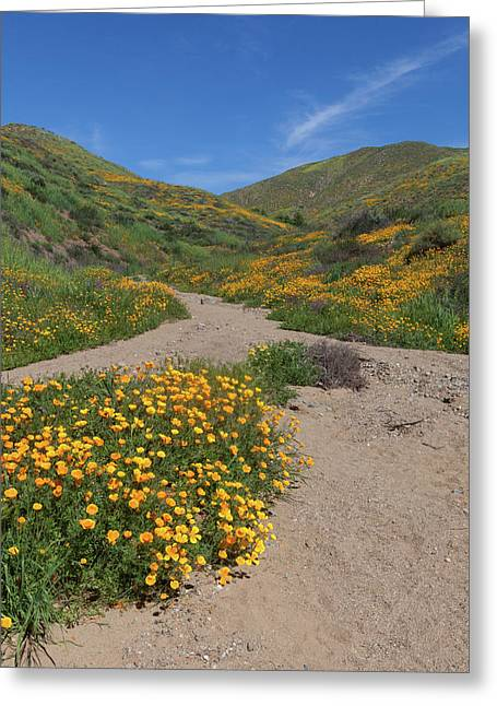 Greeting Card featuring the photograph Wildflowers Along Walker Canyone by Cliff Wassmann