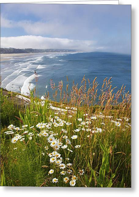 Wildflowers Along Yaquina Head Newport Greeting Card by Craig Tuttle