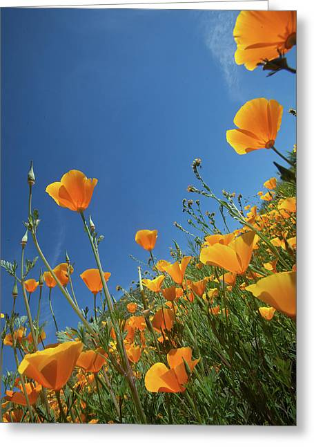 Greeting Card featuring the photograph Wildflowers And Blue Sky by Cliff Wassmann