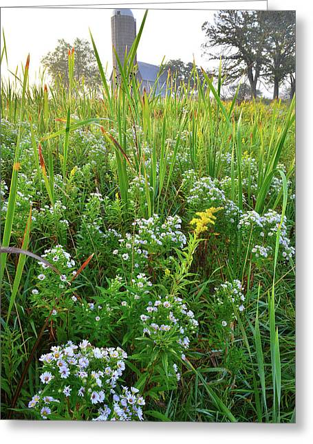 Wildflowers And Cattails Of Hackmatack Nwr Greeting Card