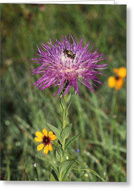 Greeting Card featuring the photograph Wildflowers And Friend by Sheila Brown