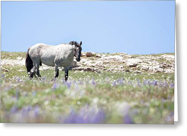 Wildflowers And Mustang Greeting Card