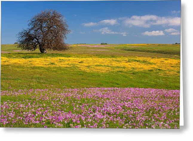 Wildflowers And Oak Tree - Spring In Central California Greeting Card