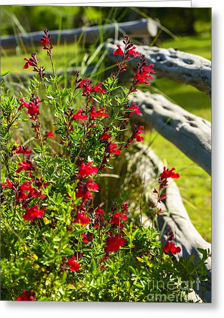 Wildflowers And Rail Fence Greeting Card by Thomas R Fletcher