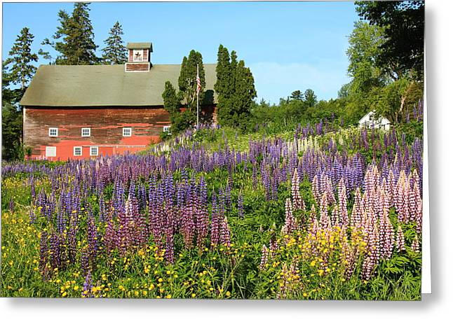Wildflowers And Red Barn Greeting Card by Roupen  Baker