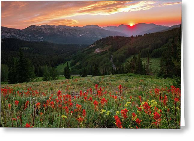 Wildflowers At Gaurdsmans Pass Greeting Card