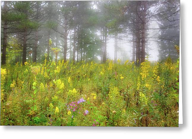 Wildflowers At Retzer Nature Center  Greeting Card by Jennifer Rondinelli Reilly - Fine Art Photography