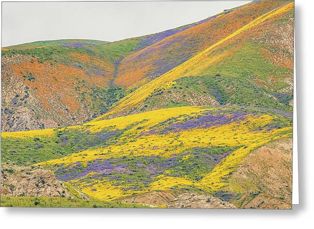 Greeting Card featuring the photograph Wildflowers At The Summit by Marc Crumpler