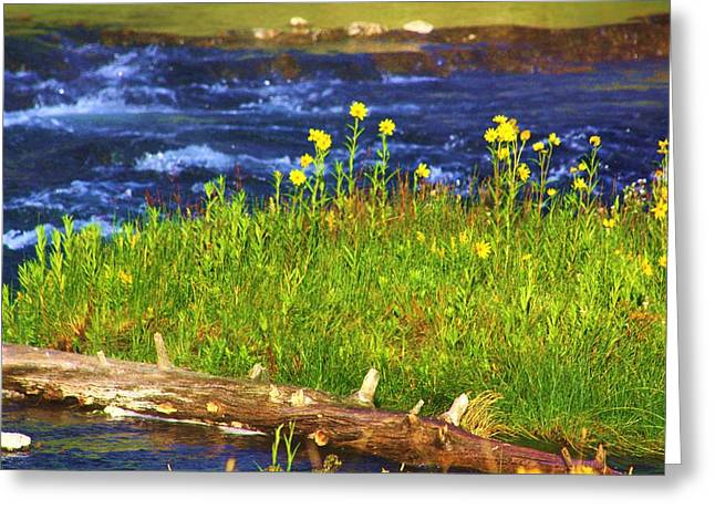 Wildflowers By The River Greeting Card by Russell  Barton