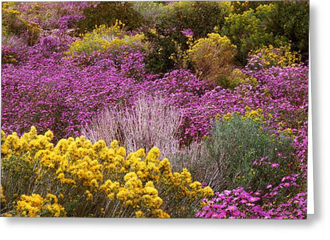 Wildflowers El Prado Nm Greeting Card by Panoramic Images