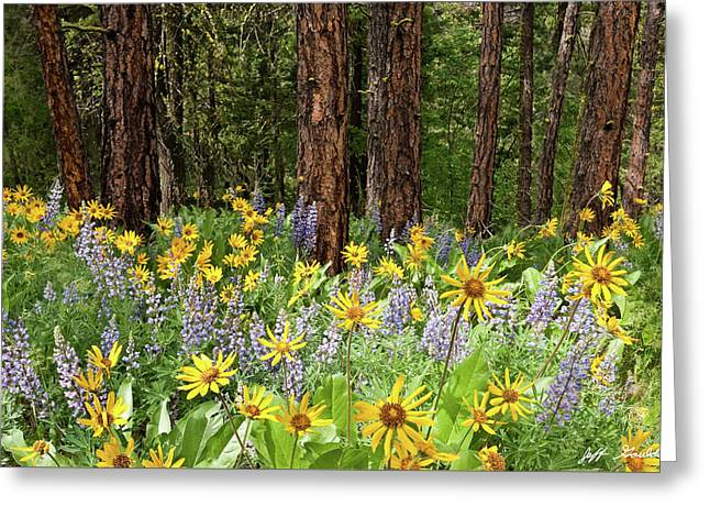 Balsamroot And Lupine In A Ponderosa Pine Forest Greeting Card