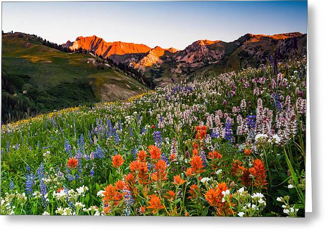 Wildflowers In Albion Basin. Greeting Card