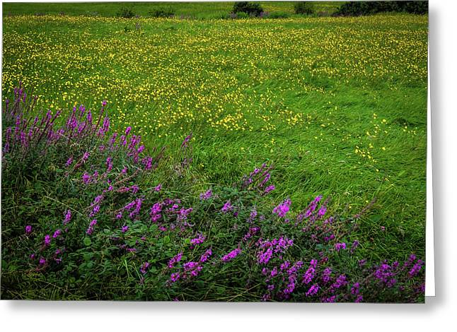 Greeting Card featuring the photograph Wildflowers In An Irish Field by James Truett