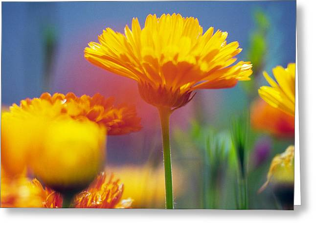 Wildflowers In Bloom, Soft Focus Close Greeting Card by Panoramic Images