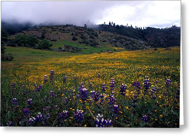 Landscape Framed Prints Greeting Cards - Wildflowers in Fog 2 Greeting Card by Kathy Yates