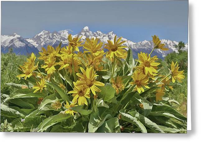 Wildflowers In Grand Teton National Park Greeting Card