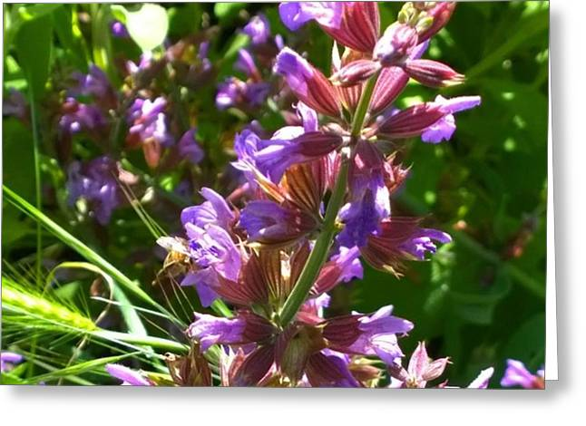 #wildflowers In #purple #country Greeting Card